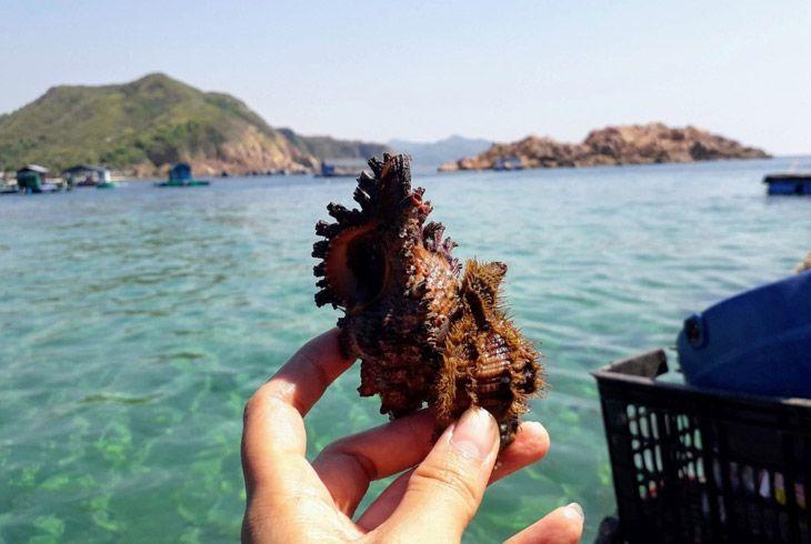 Ốc thơm ngon từ biển khơi