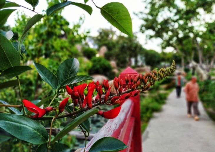 Các loài hoa đẹp trong chùa thiên hưng bình định - Ảnh: Sonca