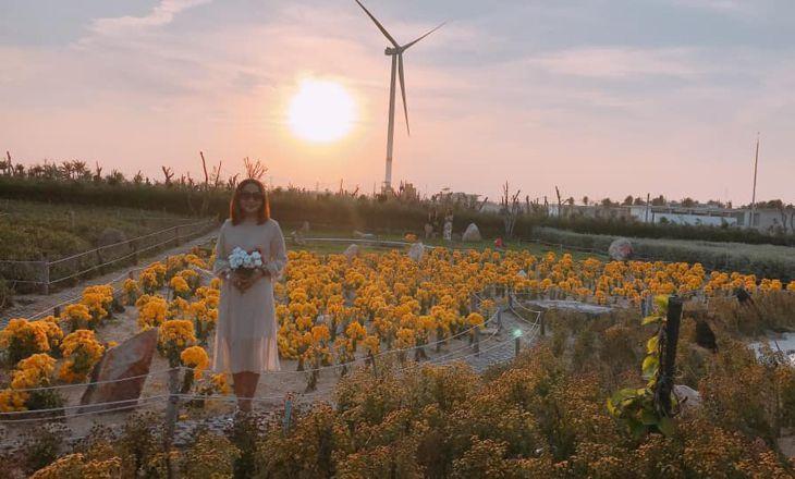 Khám phá địa điểm du lịch mới mẻ Quy Nhơn - Cánh đồng quạt gió - Ảnh:ST
