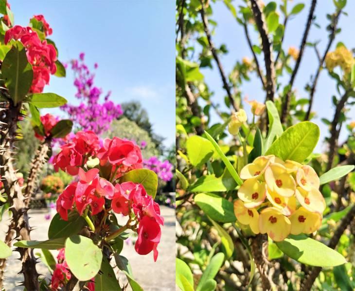 Hoa và cảnh vật rất thanh tịnh - Ảnh:Sơn Ca